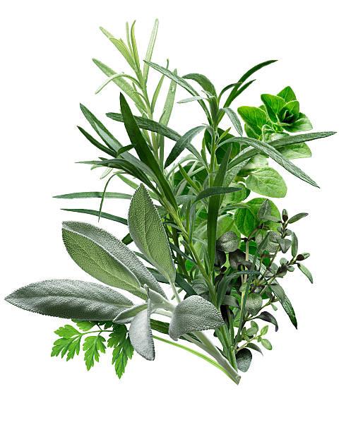 herbes de provence olive oil olivia olive oil. Black Bedroom Furniture Sets. Home Design Ideas